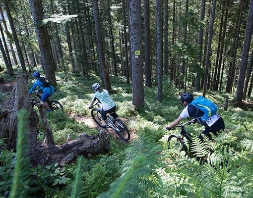 Vorschau MTB Tour Bike and Gourmet im Schwarzwald