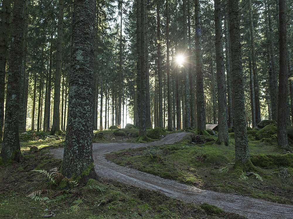 trail-schwarzwald-cross
